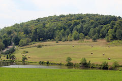Связки пруда и сена Стоковые Изображения RF