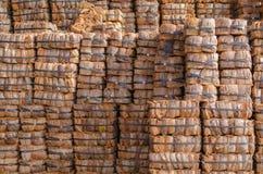 Связки раковины кокоса Стоковая Фотография
