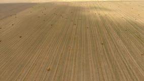Связки сена в поле Сбор сена для питания поголовья Поле ландшафта с сеном сток-видео