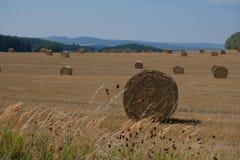 Связки сена в поле в чехе Стоковые Фото