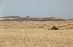 Связки сена в полях, провинции Jerez, Кадиса, Испании Стоковое Изображение