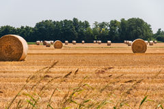 Связки сена в полях Стоковое Фото