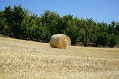 Связки сена в сельской местности Стоковое Фото