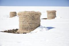 Связки сена в снеге Стоковая Фотография
