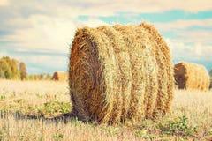Связки сена или соломы в поле Стоковое Изображение