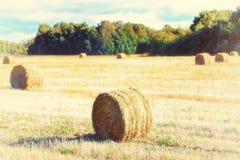 Связки сена или соломы в поле Стоковые Изображения
