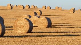 Связки сена на поле после поля сбора аграрного alberta тюкует временя прерии ландшафта сена полей сельское акции видеоматериалы