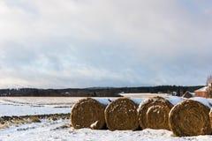 Связки сена на поле Стоковое Изображение