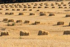 Связки сена Стоковая Фотография
