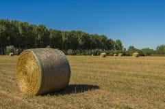 Связки сена Стоковые Фотографии RF