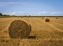 Связки соломы на поле после сбора стоковое фото rf