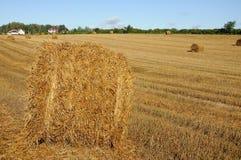 Связки соломы на поле Стоковые Фотографии RF