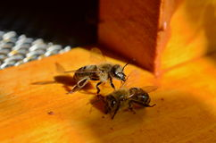 Связь пчел стоковые фотографии rf