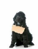 Связь собаки Стоковая Фотография