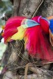 Связь ткани 3 цветов с деревом, для тайского верит Стоковые Изображения