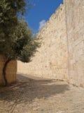 святейшие люди Израиля Иерусалима еврейские большая часть один люд устанавливают места священнейшие к голося стене Узкая малая ул Стоковые Фотографии RF