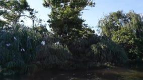 Святилище цапли на tejo реки, Португалия видеоматериал