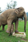 Святилище слона Стоковая Фотография