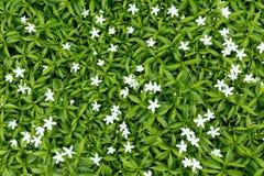 святой petersburg России цветка кровати близкое вверх Стоковые Фото