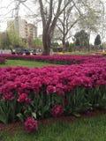 святой petersburg России цветка кровати близкое вверх Стоковая Фотография