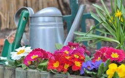 святой petersburg России цветка кровати близкое вверх Стоковое Фото