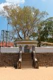 Священное дерево Sri Maha Bodhi в Anuradhapura, Шри-Ланке Стоковое Изображение