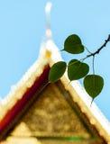 Священные фиговые листки с виском Стоковое Фото