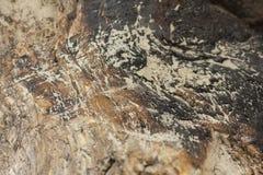 сгоранная древесина Стоковое Изображение RF