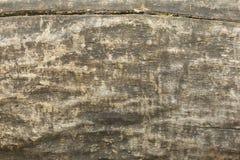 сгоранная древесина Стоковые Изображения