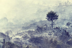 сгорели вал оставшийся в живых пущи Стоковая Фотография