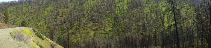 Сгорели выхваты от недавнего лесного пожара стоковые изображения