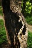 Сгорели дерево коры в природе стоковые фото