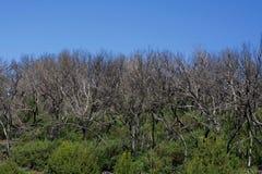Сгорели деревья Ла Gomera Стоковое Изображение RF