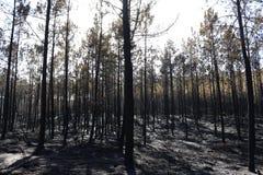 Сгорели лес, который - Португалия Стоковые Изображения RF