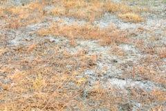 Сгорели поверхностью, который лист травы земли в лете золы глобальное потепление загрязнения воздуха Стоковая Фотография
