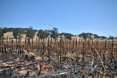 сгорели предпосылкой, котор стога холмов травы Стоковые Фотографии RF