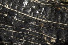 сгорели расшива, котор Стоковые Фотографии RF