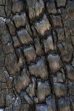 Сгорели ствол дерева Стоковое Изображение RF