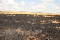 сгорели трава Стоковая Фотография