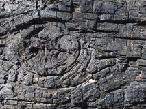 Сгоренная деталь ствола дерева, черная текстура цвета предпосылки дерева Стоковые Изображения