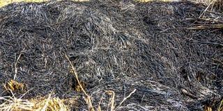 Сгоренная солома стоковая фотография rf