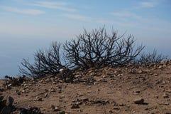 Сгоренный вне bush после огня Стоковое Изображение