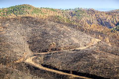 сгорели ландшафт пущи Стоковое Фото