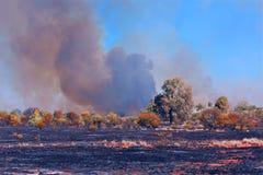 Сгорели ландшафт Стоковая Фотография