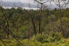 Сгорели деревья в лесе дубов Стоковое фото RF