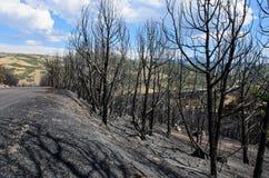Сгорели деревья Стоковая Фотография RF