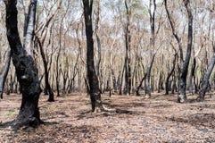 Сгорели лес после огня Стоковая Фотография