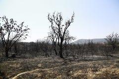 Сгорели лес Стоковые Фото