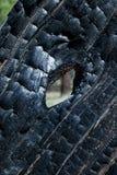 Сгорели конспект дерева Стоковые Фотографии RF