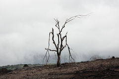 Сгорели мертвое дерево стоковое изображение rf